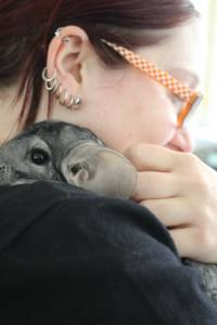 Adopted chinchillas 14 [ 83.79 Kb ]
