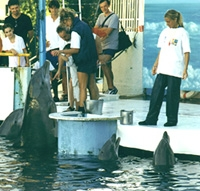 Photo copyright Helene O'Barry - source: www.dolphinproject.org