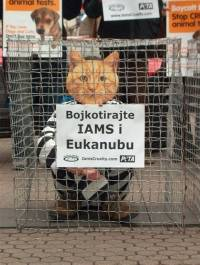 'Cats 'and 'Dogs' Against Iams