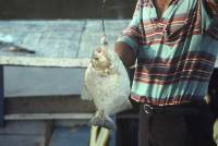 Peru piranha fishing [ 57.70 Kb ]