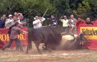 Bullfights [ 113.17 Kb ]