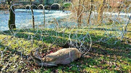 Animal Rights Day Marked With Razor-blade Wire [ 166.31 Kb ]