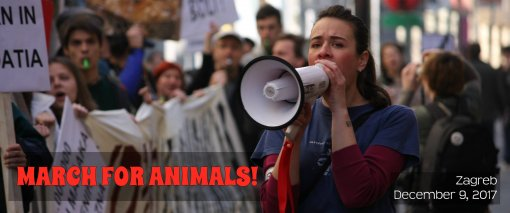 March for animals [ 249.26 Kb ]