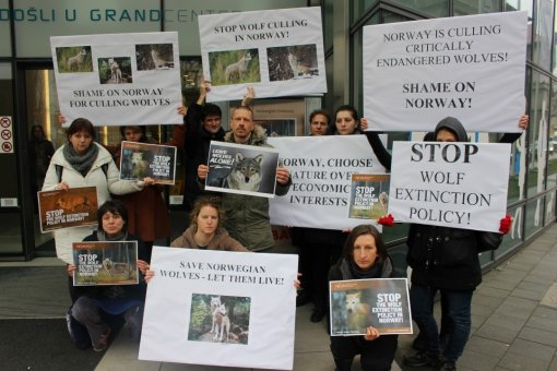 Demo against the massive wolf culling in Norway [ 216.47 Kb ]