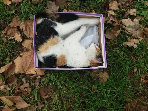 Dead cat in a shoebox