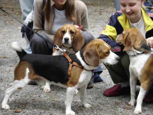 Reunion of the beagles 3