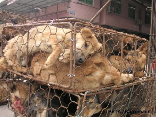 Chinese fur industry 1