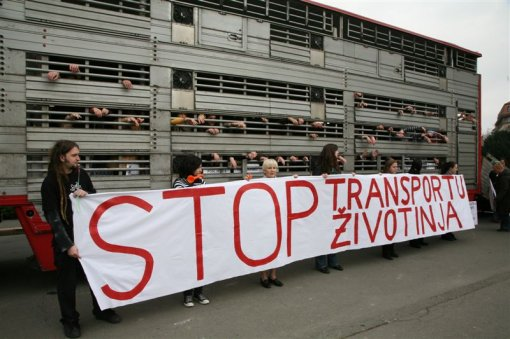 Protest against live animal transport 3 [ 105.80 Kb ]