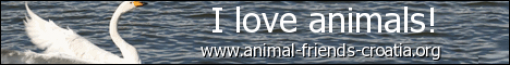 I love animals! - eng