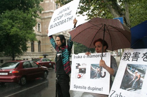 Protest against dolphin killing [ 546.91 Kb ]