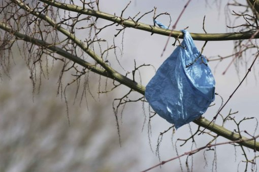 plastic bag on tree [ 103.77 Kb ]