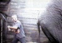Source: Animal Defenders - elephant training [ 13.23 Kb ]