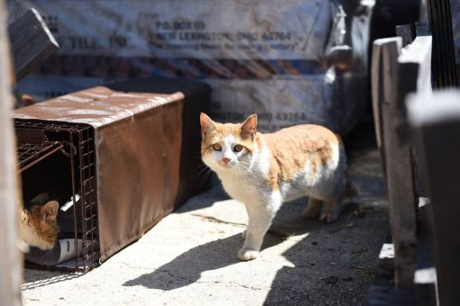 Alley cat, photo by Alley Cat Rescue Inc. [ 70.25 Kb ]